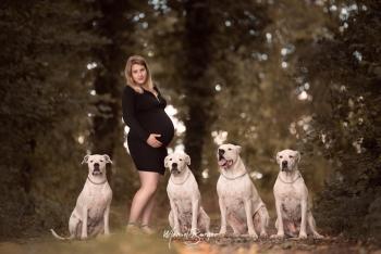 grossesse avec chiens animaux